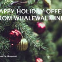 Close up on Christmas tree branches with title: Happy Holiday Offer from Whalewalk Inn.