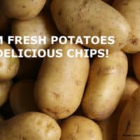 """A pile of yellow potatoes with the title"""" From Fresh Potatoes to Delicious Chips"""